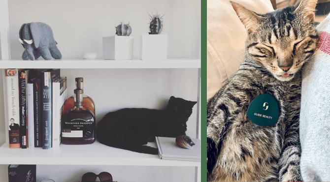 Meet-Julianna-Miller-Cats-and-Design