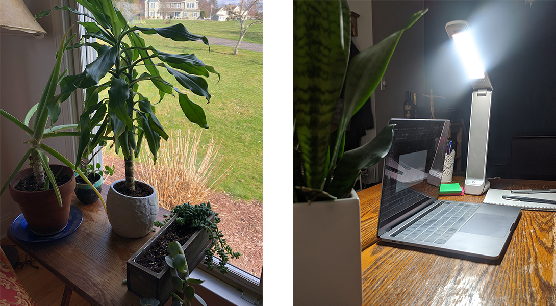 one plant and lamp
